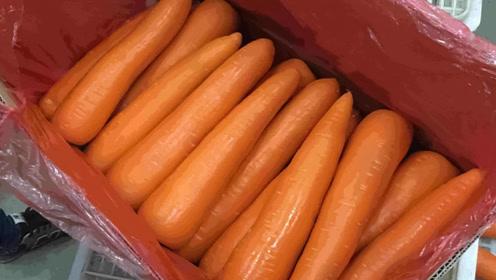 胡萝卜光滑又油亮,洗过的萝卜能放心吃吗?