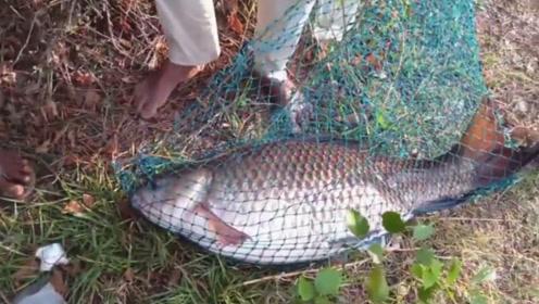 男子钓到罕见大鱼,拉上岸后彻底蒙圈,这是鲫鱼还是鲤鱼?