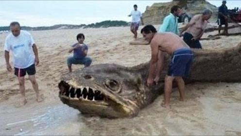 """暴雨之后,身长6米的""""海怪""""光临海滩,不料游客却做出这种事情"""