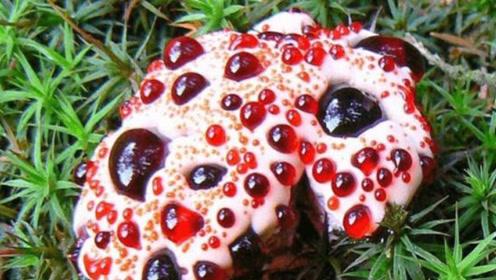 看着像草莓圣代,其实这东西有毒,看见千万别去碰它!