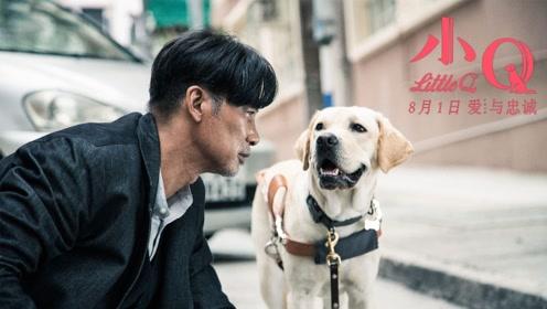 与日版《导盲犬小Q》相比,更喜欢任达华版本,五次离别戳泪点