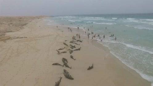 西非海滩近200只海豚因不明原因搁浅 136只死亡