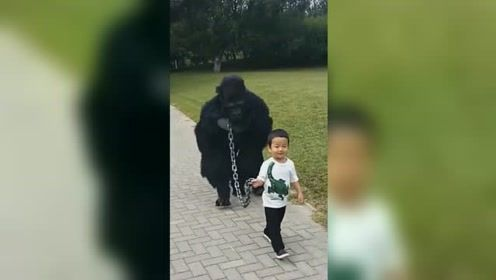 """萌娃遛""""黑猩猩""""霸气十足惊呆路人,回家后的一幕笑喷网友"""