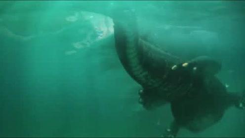 为寻失踪哥哥前往荒岛,惊现巨鳄出没!