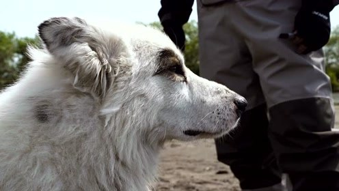 蓝旗鱼路亚   钓鱼堪察加,荒野中遇到了一条狗
