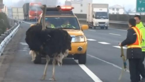 驴友假期出游,路遇高速黑影,警方赶到将其当场拿下