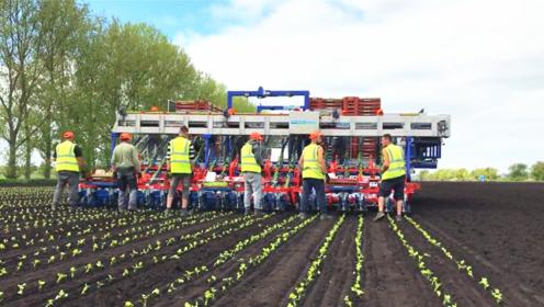 国外大型自动种菜机械,可以顶十几个人的工作量,效率还真高