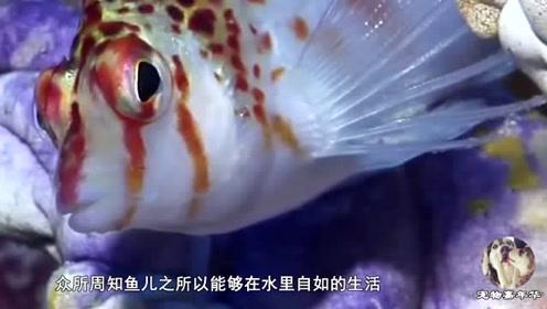 鱼也会被水淹死?这是真的吗?看完你都不敢相信