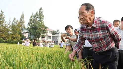 过去吃不饱穿不暖,但到了今天,中国为什么能养活14亿人?