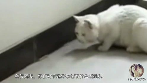 """老鼠被猫抓,使出一招""""原地转圈法"""",猫咪:我就静静的看着你"""