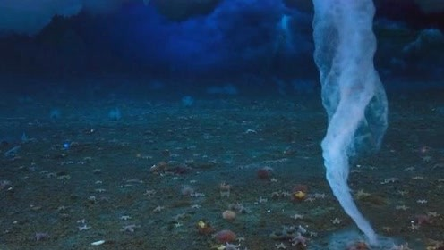 海底最强杀手被发现,没有生物是它的对手,人类见到都得绕道走