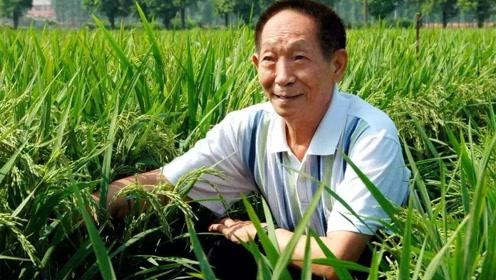 袁隆平在中国科技史的地位可以和钱学森,邓稼先平等或超越吗?
