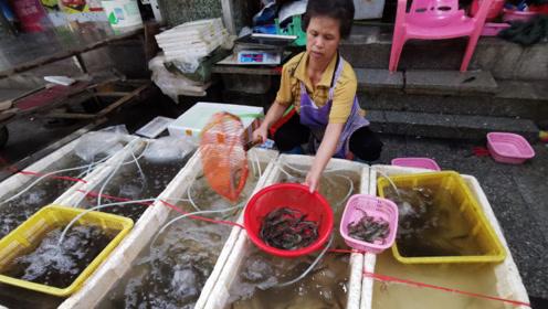 广西灵山不靠海,但海鲜价格不输北海,螃蟹只要70元一斤