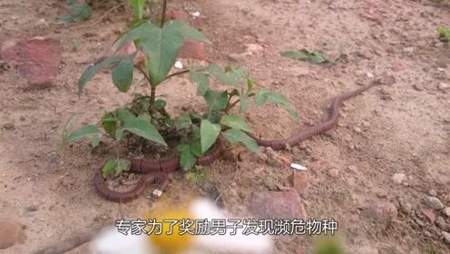 男子庭院发现剧毒无比的白头怪蛇,专家赶到后一句话男子乐坏了