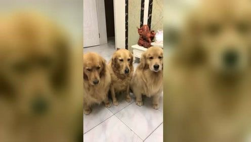 女主人要出远门,给家里狗狗开会,狗狗这幅挨打的表情