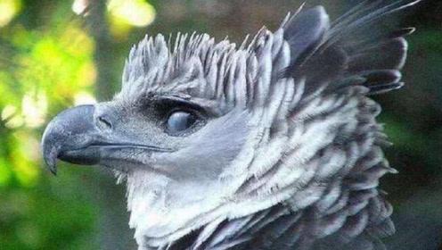 """世界上最大的""""鸟"""",拥有超帅侧脸,看到正面后千万忍住!"""