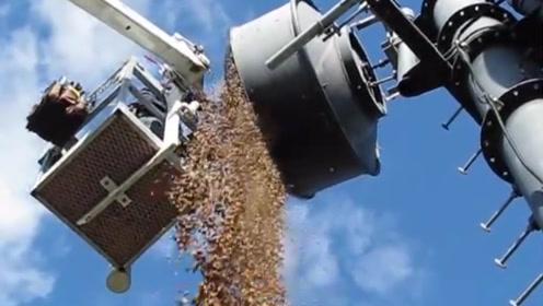 郊区清理信号塔,发现松鼠藏的坚果,数量庞大,可它无福消受