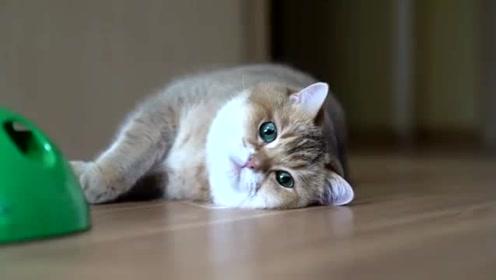 【Hosico Cat】Hosico猫与老鼠,这个视频能让你快速入面