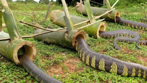 农村男孩发明捕蛇神器,一捉一个准!网友:这些蛇也太蠢了!
