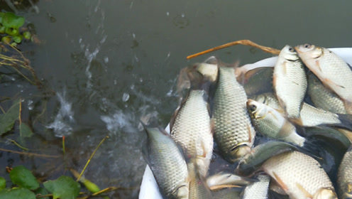 水草藏鱼好地方,妹子开这个饵,连竿一下午