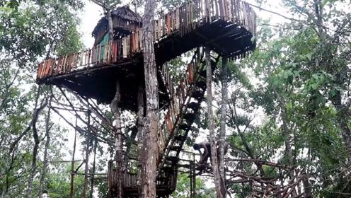 牛人脑洞大开,在树上建了套房子,网友:鸟儿看了都羡慕