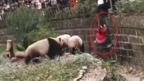 小女孩不慎掉入熊猫窝,众人心急如焚,下一秒熊猫举动笑翻众人!