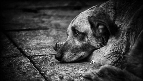 小哥路边捡到一只流浪狗,精心照料数月后,邻居纷纷抢着养