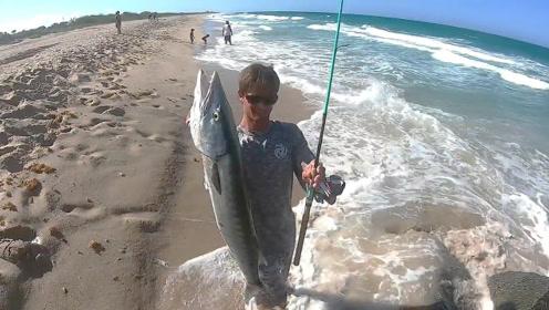 沙滩上浪潮滚滚,巨大的海狼鱼出没!