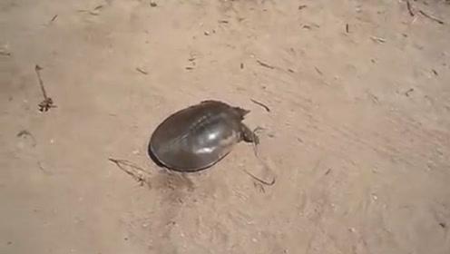 小伙下车发现一只晒太阳的乌龟,刚要靠近瞅瞅,下秒出现搞笑画面
