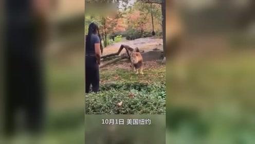 女子跳进动物园挑逗狮子,狮子一脸蒙圈