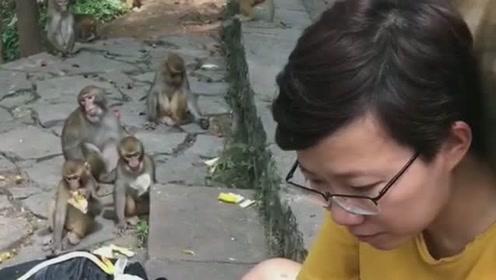 小哥哥跟猴子沟通无障碍,连分起奶片来猴子都好有秩序,不争不抢的等着!
