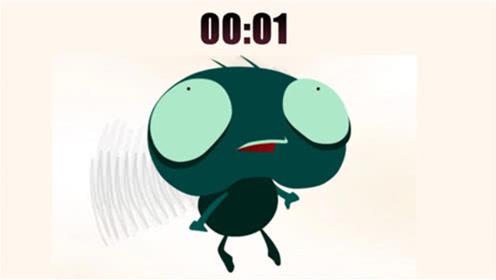 苍蝇生命仅仅一分钟,却拼命去完成理想,你还敢浪费时间?