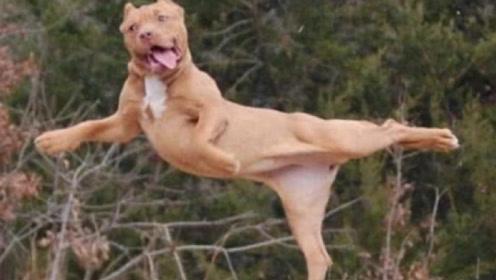 大妈带狗子跳广场舞,不料狗子跳得竟然比她还好,看完憋住别笑!