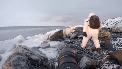 摄影师偶遇北极熊,果断冲出吓走北极熊,还是低估了它好奇心!