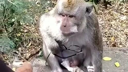 老爷子眼镜被猴子抢了,只好用这一招,效果真是杠杠滴