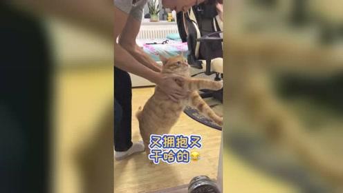 养宠物别说你是高手,一只猫咪都能养成这样,有谁能做到