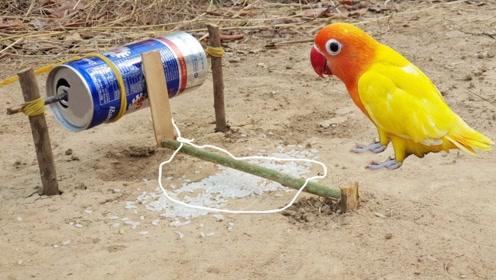 喝完的可乐罐不要扔,用它做个小机关,鸟儿碰上躲都躲不了