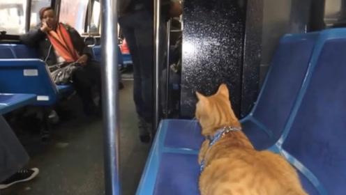 """猫咪每天独自坐公交,司机每次都等它,网友:猫界""""忠犬八公"""""""