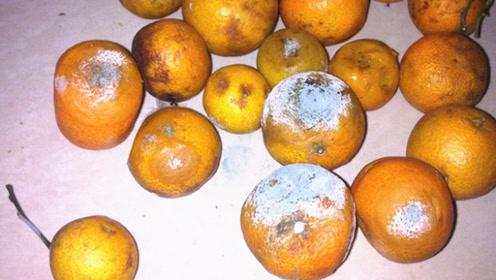 你家有烂橘子吗?还好知道及时,别不当回事,告诉家人,越快越好
