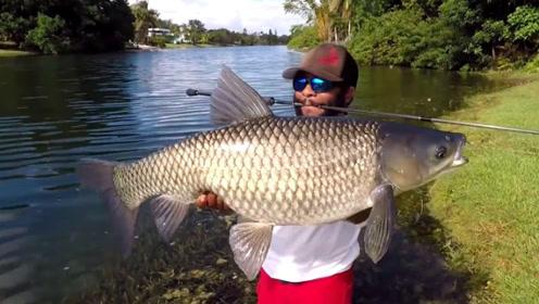 鱼钩藏进面包里面,男子湖中钓获50斤野生大草鱼,瞬间乐坏了!