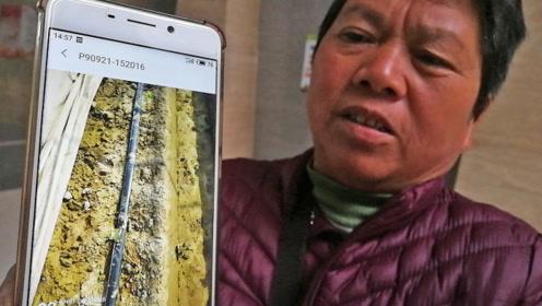 长安农妇花1万4买的草莓苗栽种后大面积死亡出售公司玩失联