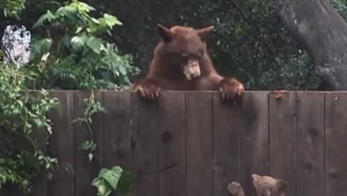 熊妈妈教小熊翻围墙,可小熊就是翻不过去,下一幕大家忍住别笑