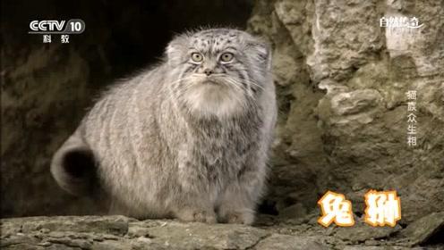 盘点猫族众生相 教你如何成为识猫达人