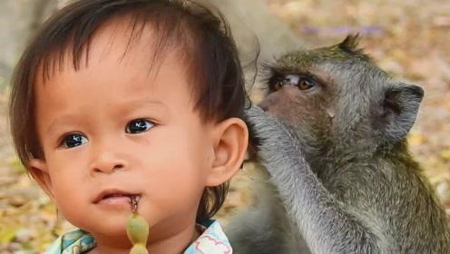 猴子母爱泛滥,把小孩当成自己的宝宝,寸步不离在身边守护!