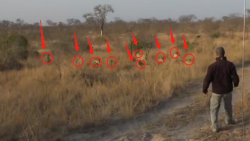 男子偶遇十几只狮子,这该怎么办?接下来他的做法堪称教科书级别