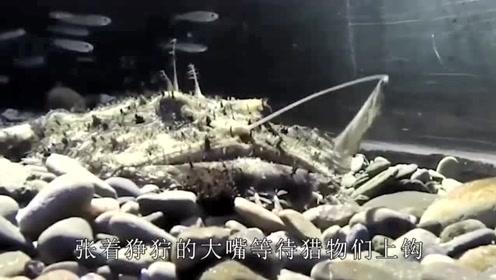 大家知道鮟鱇鱼吗?鱼肝和鹅肝有所不同,蘸料吃上一口很过瘾