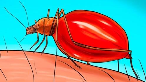 """蚊子喝了醉汉的血后,会不会也成""""醉汉""""?一起来见识下"""