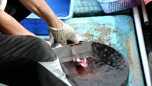 想吃海鱼就得去码头买,这么新鲜的海鱼绝对少见啊