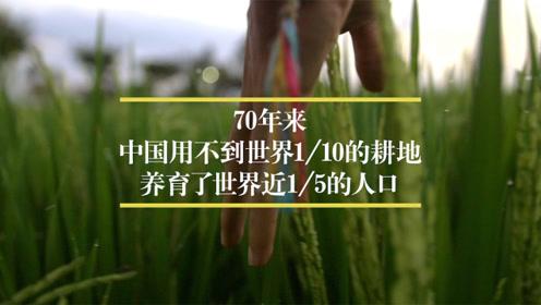 【数据可视化】近20年中国各地粮食产量排行:黑龙江霸榜,河南紧随
