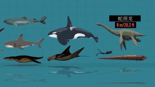 地球上最大的海洋生物是什么